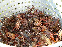 Crawfish getting their last rites.