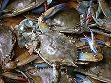 Blue Louisiana Crabs