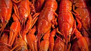 Boiled Louisiana Crawfish